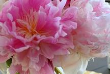 Fleurs / by Jane Clements