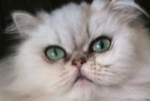 Cat Crazy! / by Vickey Vicknair