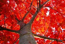 Fall into autumn / by ***Daybyday****    and  Diane Morris Kabat