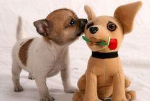 Chihuahuas / by Susan Schmarkey