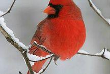 Birds / by Janet Switzer