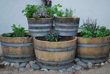 herbs & veggies / by Dana Johnson