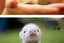 Adorable Animals! / by Katie D