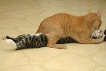 Funny or cute (by cute I mean cats it's quite the same) / by Ulrich Adelaïde