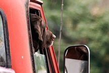 Woof!!!!!! / by Kristine Sainted