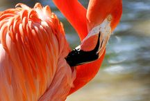 Flamingo's / by David Moyer