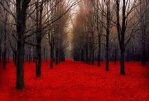 Autumn / by Neta Herron