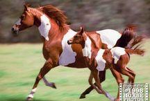 Horses / by Kathryn