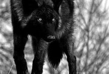 ANIMALS / by Rhonda Johndrow