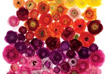 Color Inspiration- Rainbow / by Jerry Rose Floral and Event Design