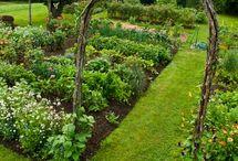 Gardening Dreams / by Carmen Strain