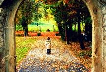 I Love Fall / by Olivia Manzo