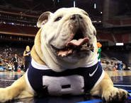 Best Sports Mascots / The best sports mascots from college to professional teams - these guys/girls/animals are the ones who pump you up and make you scream a little bit louder for your team on the field! / by Sports Unlimited