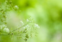 All shades of GREEN / by Meta B