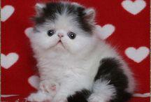 Cute Animals / by spca LA