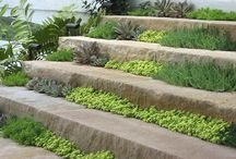 landscaping / by Deana Harkness