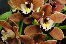 I LOVE Orchids / by Moe Margetts