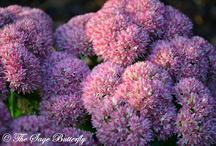 Beautiful flowers / by Heidi Forrest