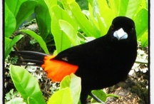 Birds of Colombia / by Colombia Eco Travel