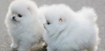fuzzy / by JASMINE PATRICK
