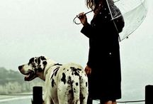 Animals I LOVE / by Jennifer Nettles