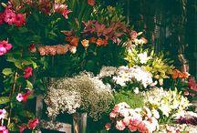 Flower / by Lisa Vu