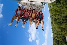 Rides / by Busch Gardens