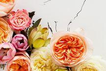 Flowers / by Shizuko Tanaka