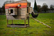 Chickens / by Kristin Graettinger