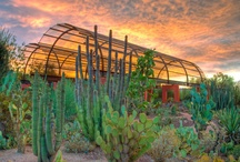 Phoenix Happenings / 411 on all that Phoenix has to offer! / by Phoenix Cooks