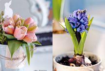 Flowers / Flowers  / by Flor ArtDesign