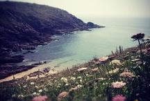 The west coast / by Romuald Garnier