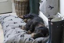 Utility Porch  / by Sherry Doub