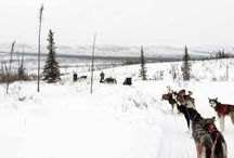 Good reading in the News-Miner / We write lots of stories and columns about Fairbanks and Interior Alaska every day, but some just catch your eye a bit more. I'll put some of them here from time to time. / by News-Miner editor