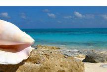 bahamas cruise / by Yale Pearlson