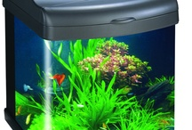 Fish and Pond Articles / by Pet Age