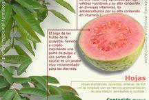 La botica naturista de Télle  / Curación con plantas / by Teresa Gasca