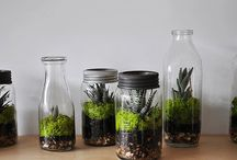 Plants & Terrariums / by Kyle Smith