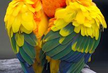 Animals-Birds-Parrots / by Ellary Branden