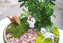 Mini gardens / by Verla Matthews