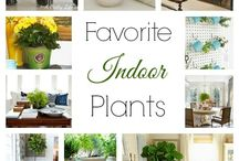 Indoor plants / by Leslie Bruno