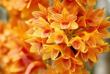 Flowers / by Nilgün A.