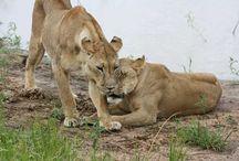 African Safari / by Tamar Arslanian