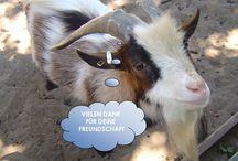 Fotos / Bilder / Sprueche Freundschaft Friendship - Legakulie / Sie finden auf dieser Seite #http://kostenlose-fotos-bilder-sprueche-legakulie.de/ #lizenzfreie, weil von mir selbst fotografierte und verschönerte #Bilder, kostenlos zum Download. #http://kostenlose-fotos-bilder-sprueche-legakulie.de/impressum-agb.html  / by Sabine Eckhardt