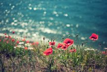 Human & Nature photos / Favorite things... / by Mariana Teixeira