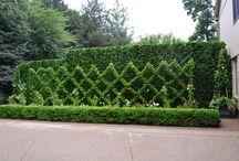 Madison street exterior ideas / smallish front yard ideas including fence, walkways, garden / by Susan Clickner