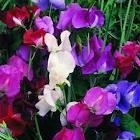 Gardening / I love to putt around in my back yard... / by Sandy Keyser
