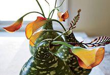 Gardening / by Wendy Parker-Harrison