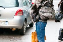 Street Style Furs / by Autumn and Yo's Vintage