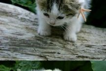 Cute and Fluffy / by Marina Ostrov